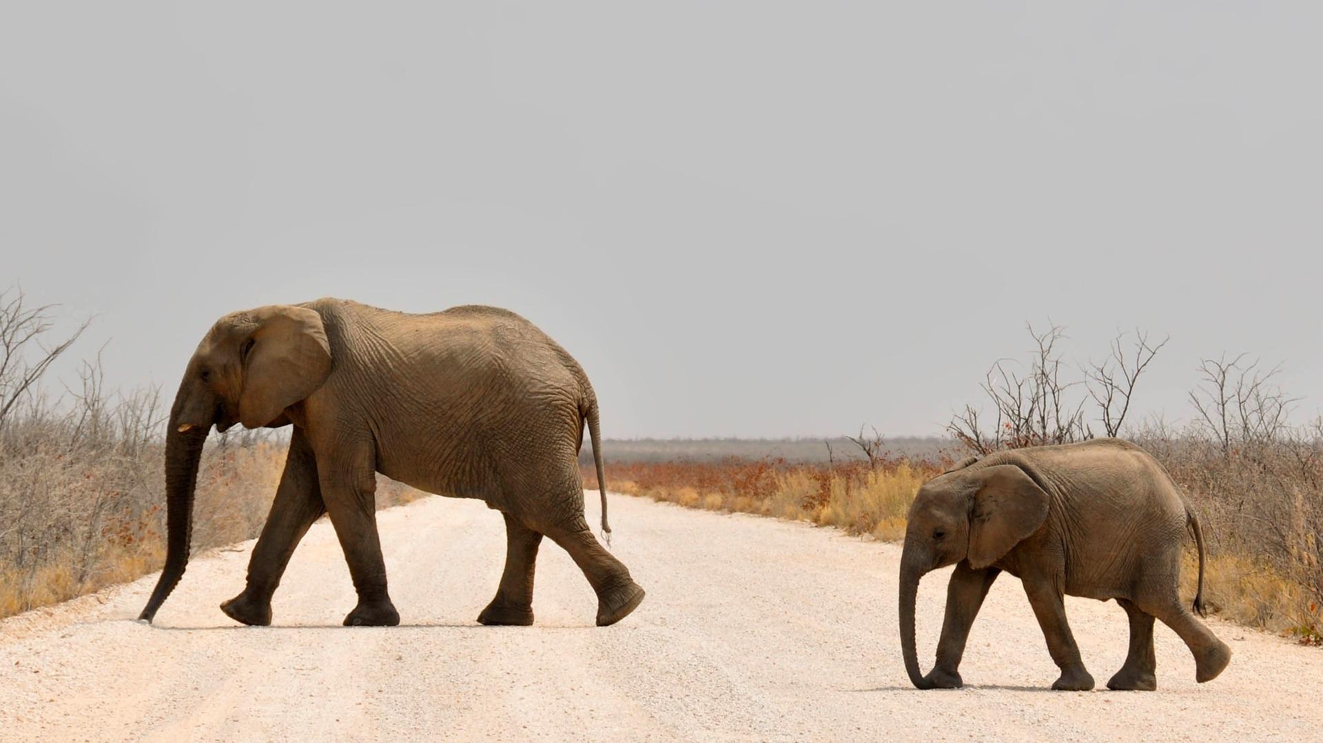 elephant-1170107_1920