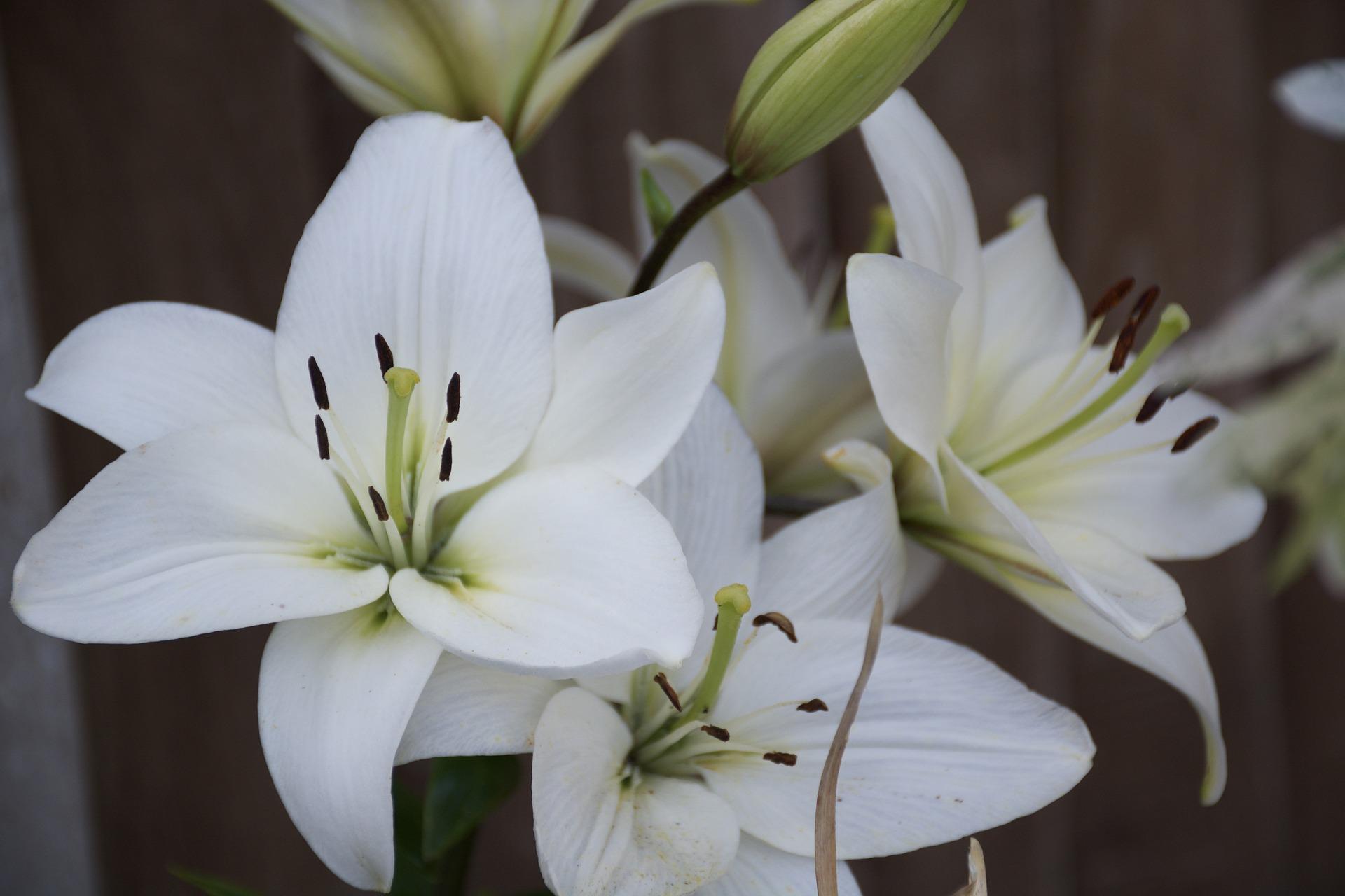 flower-980689_1920